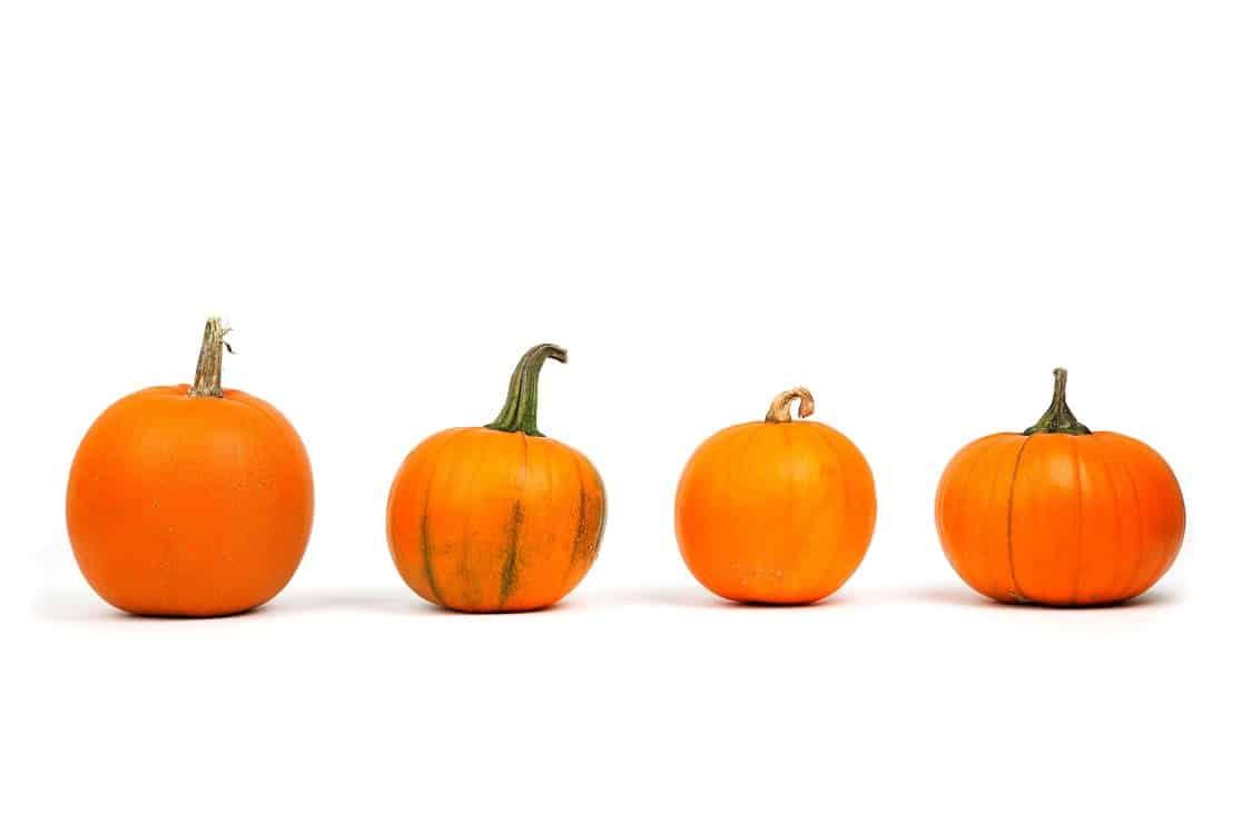 ארבע סוגים וגדלים שונים של דלעת להכנה של שמן זרעי דלעת