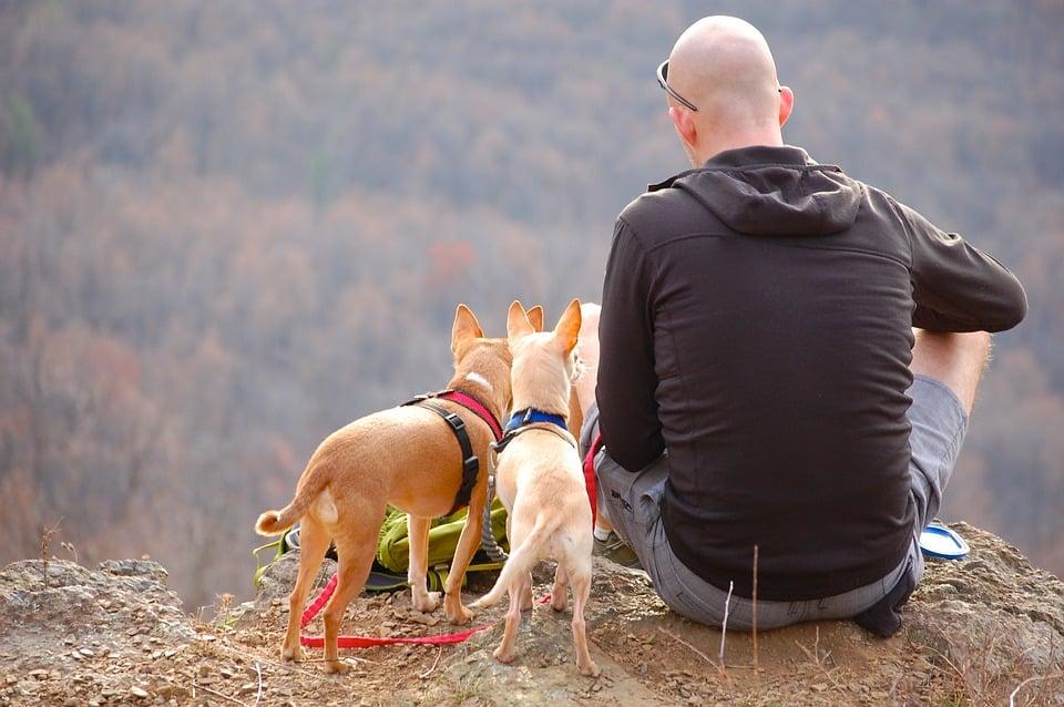 גבר עם נשירת שיער עונתית בטיול עם הכלבים