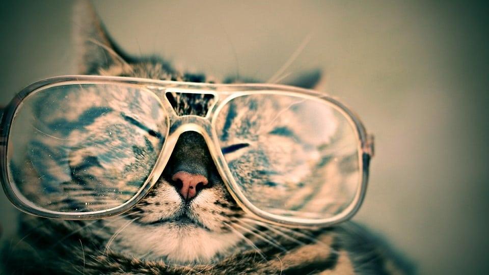 חתול עם משקפיים