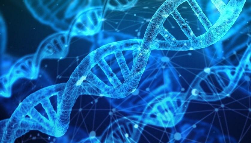 קוד גנטי עם נטייה להתקרחות
